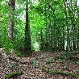 photography colorful walk woods forestgreen