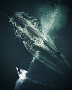 madewithpicsart edited surfing whale