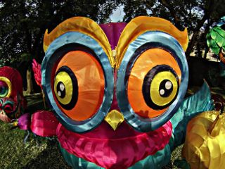 art summer interesting owlart owl