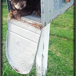 freetoedit delivery poodle mail