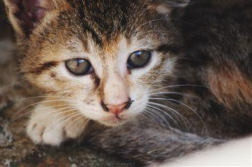 photography pet animal cat kitten