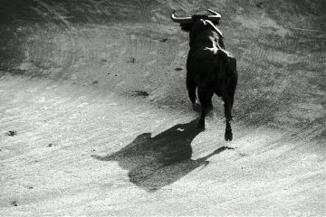 bull animal blackandwhite petsandanimals summer