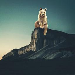 surreal surreality surrealism bear savetheanimals freetoedit