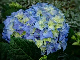 freetoedit flower