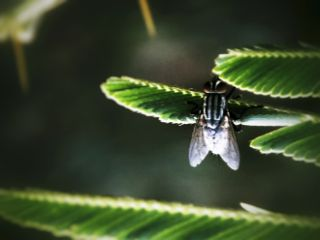 flies macro closeup nature insects
