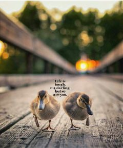 happy qoute love animals babyducks