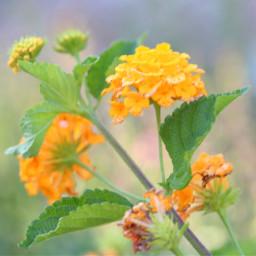 flowers yellowflowers greenleaves highkey nature