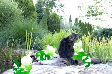 freetoedit cat green grass clouds