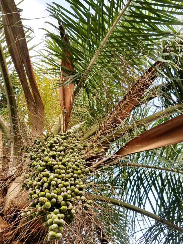 #naturephotography #palmtree #branches #texture #interesting #freetoedit