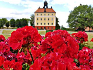 freetoedit flowers castle nature beautiful