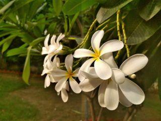 whiteflower nature freshness mobilephotography