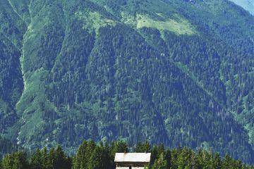 home tree mountain travel nature