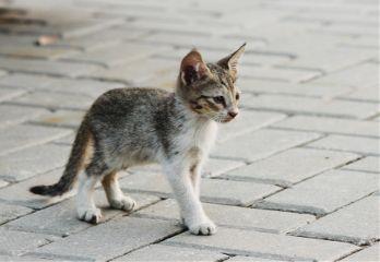 photography outdoors pet animal cat