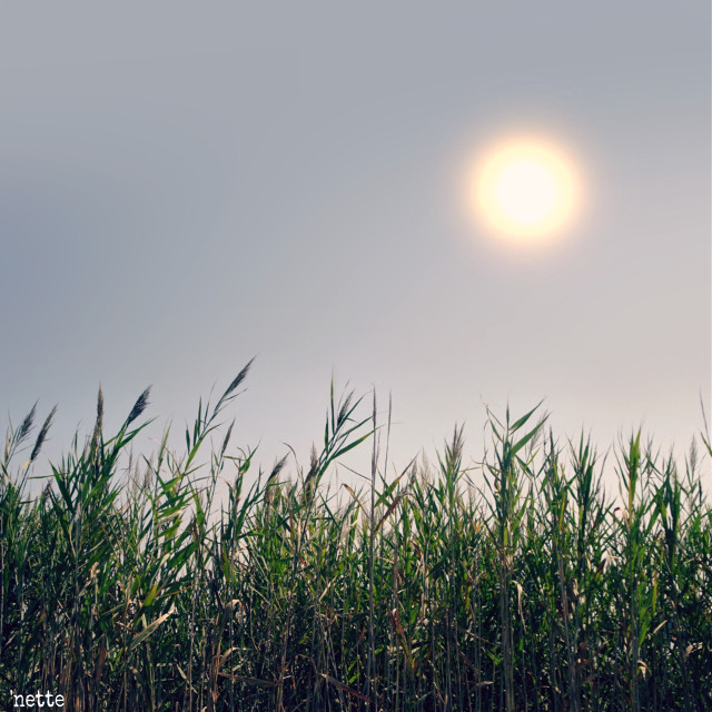 """#freetoedit #field #rural #myoriginalphoto thank you @pa for the feature in """"most liked"""""""