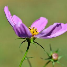 flower flowerphotography flowerlover gardenflower noedit