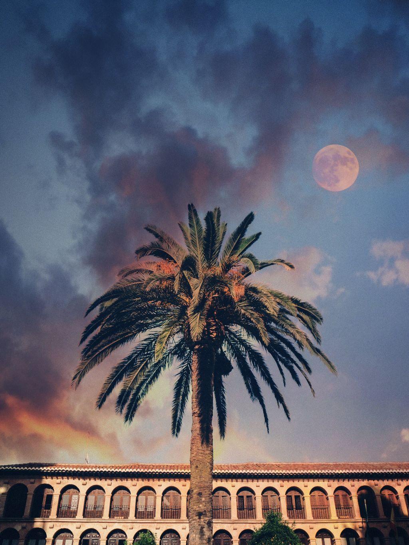 #freetoedit #palmtree #sunset #clouds #sky #moon #building #madewithpicsart #art #dodgereffect #picsart