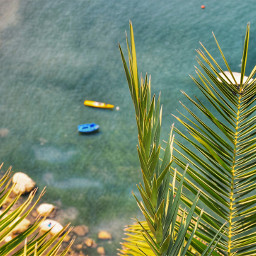 summer water boats beach flower