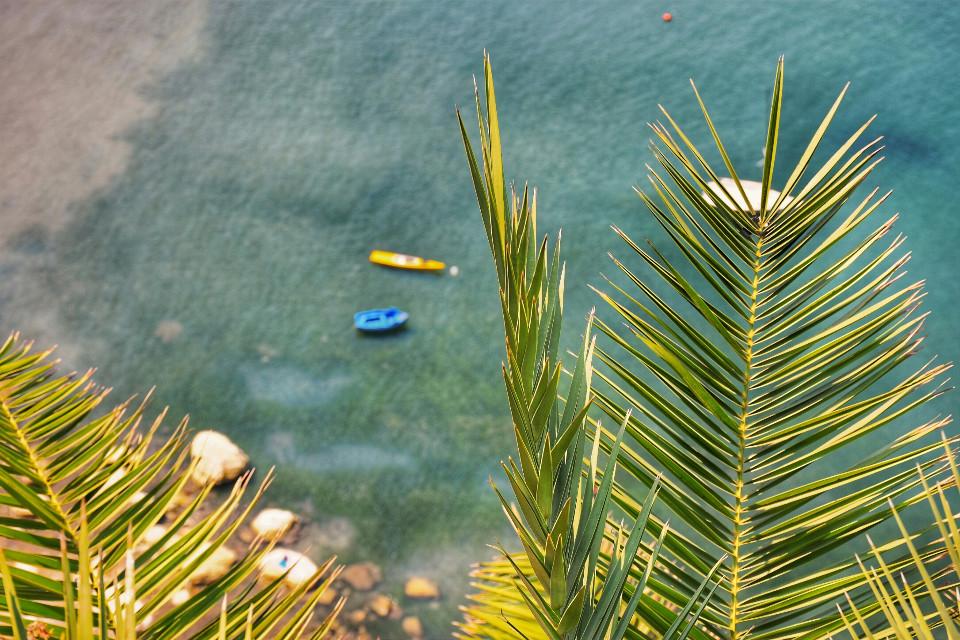 #summer  #water #boats #beach #flower