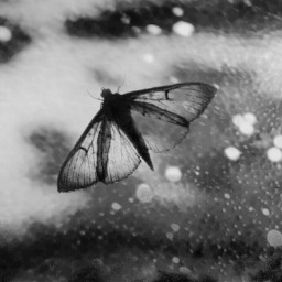 blackandwhite moth blending life reality