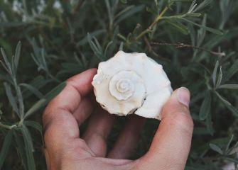 freetoedit shell hand myphoto