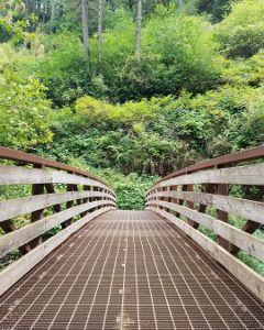 freetoedit ginwigmore blacksheep bridge nature