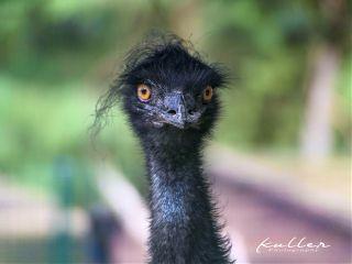 bird hairstyle petsandanimals germendorf tierpark
