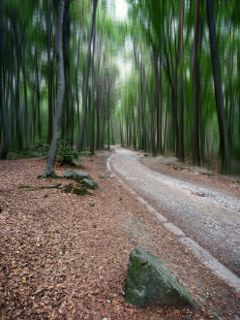 road nature woodland blureffect freetoedit