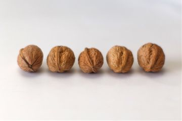 freetoedit nuts