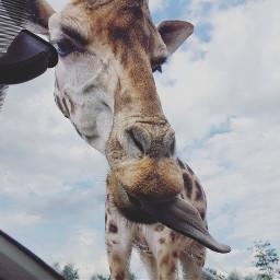 freetoedit pets animalphotography zootopia zoo