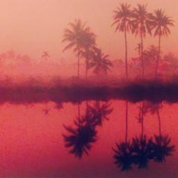 freetoedit palmtree landscape pink picture