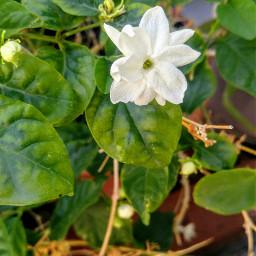 goodvibes goodmorning. nature beautifulday purebeauty freetoedit