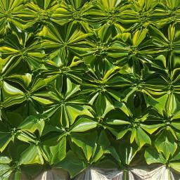 art edit new flower leaves
