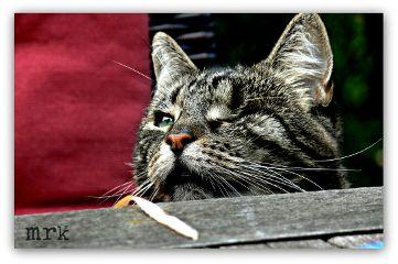 freetoedit cats nature petsandanimals photography