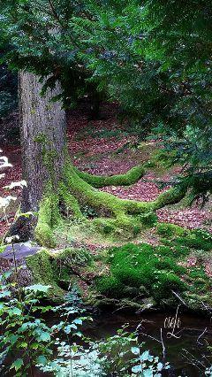 @csefi inthewood green magicalplace nature