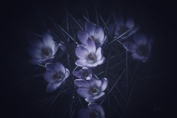 flower blossom nature darkness iphoneography