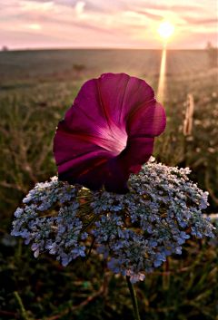 sunrise sunrisephotography flowers nature sunrays