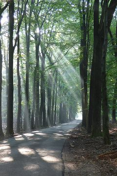 photography sunrays forest trees lonely