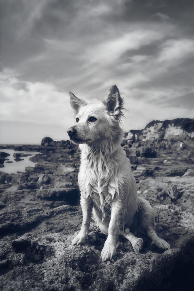 #blackandwhite #beach #petsandanimals #photography