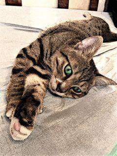 cat relaxing scratch cute animals