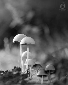 nature photography mashroo mashroom unity