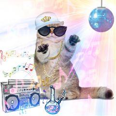 freetoedit cat party rap radio