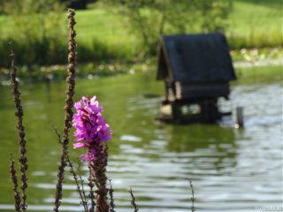 pond nofilter fokus water