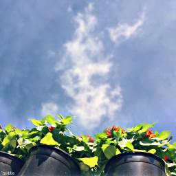 freetoedit lowangle againstthesky flowerpots myoriginalphoto