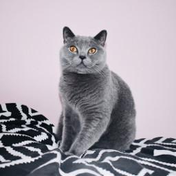 dpcroommates cat photography petsandanimals cute freetoedit