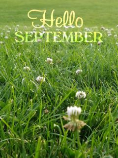 freetoedit dailystickerremix dailysticker grass green