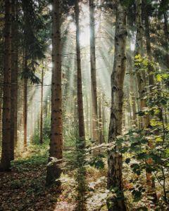 freetoedit nature naturephotography forest mist