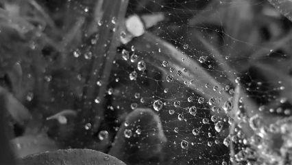 freetoedit mypic today web raindrops