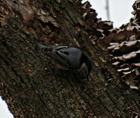 bird greyandblack wildlife nature tree