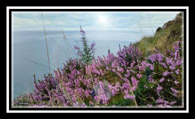 heathers coastline northeastuk nationaltrust seascape