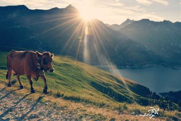 mountains sun countryside cow emotions
